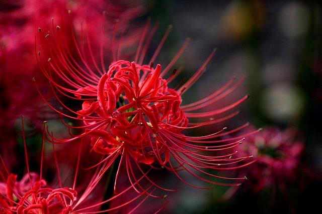 hinh anh hoa bi ngan